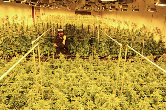 Damian Marley Buys California Prison & Flips It Into A Marijuana Farm